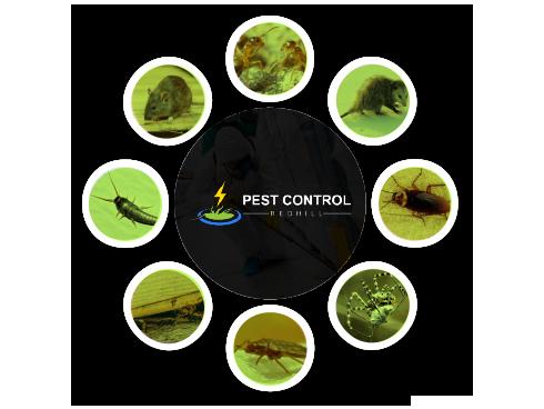 Pest Control Redhill