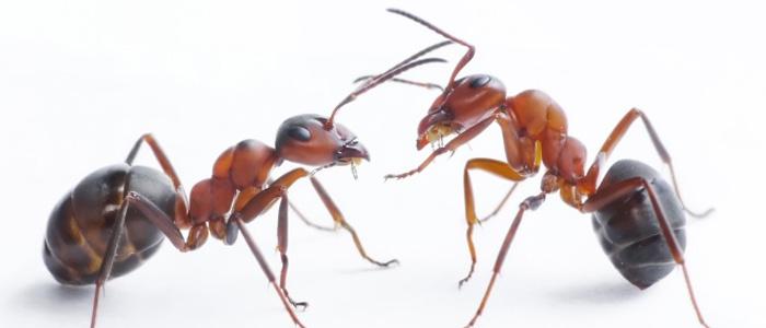 Ant Control Redhill