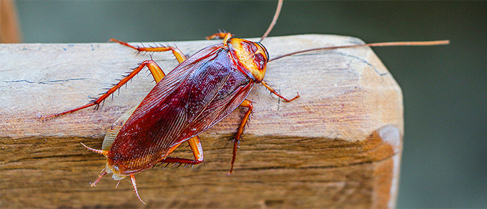 Cockroach Control Redhill