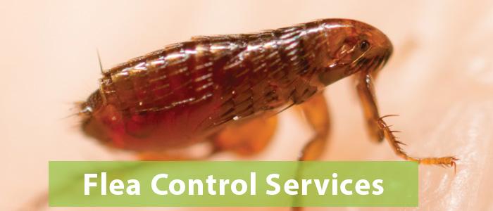 Flea Control Redhill