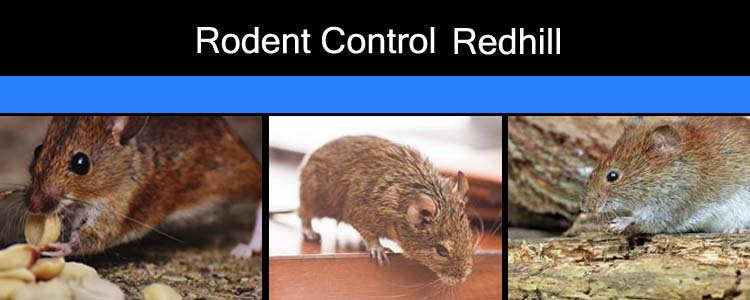 Rodent Control Redhill